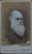 Darwin CDV
