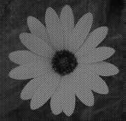 HexaFlower