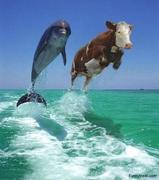 Dolphin&Cow
