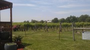 Holy Field Vinyard