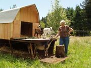 This is my play house for goats.