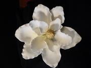 Ineligible - no cake  Gum Paste Flower Contest