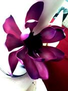 Fantasy Gum Paste Flower