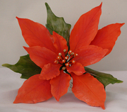 Sugar Paste Poinsettia