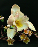 Orchid_CherryBlossoms