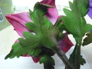 Anemones calyx