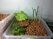 Growbed 2 - 3-10-2010