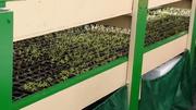 Double Decker Seeding Trays at Green Acre Organics
