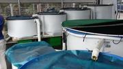 Green Acre Organics Fish Tank