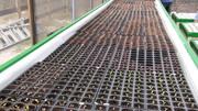 Top Deck Seeding Trays at Green Acre Organics