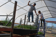 Hanging tomato and pea trellises with my one helper Ryan.