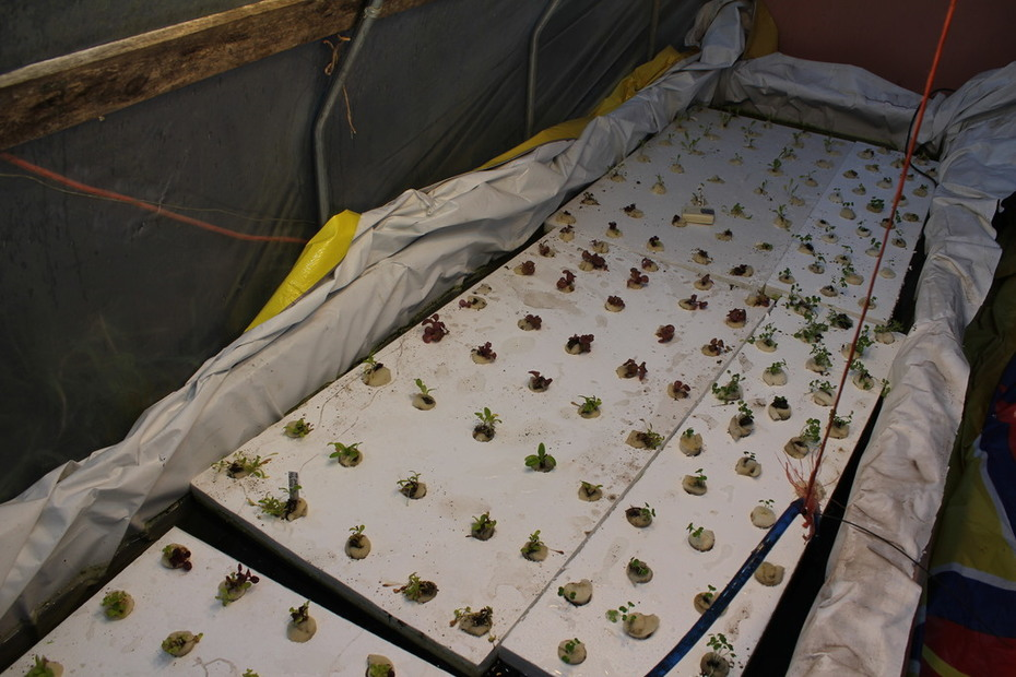 greenhouse tank 770 gallons under the rafts
