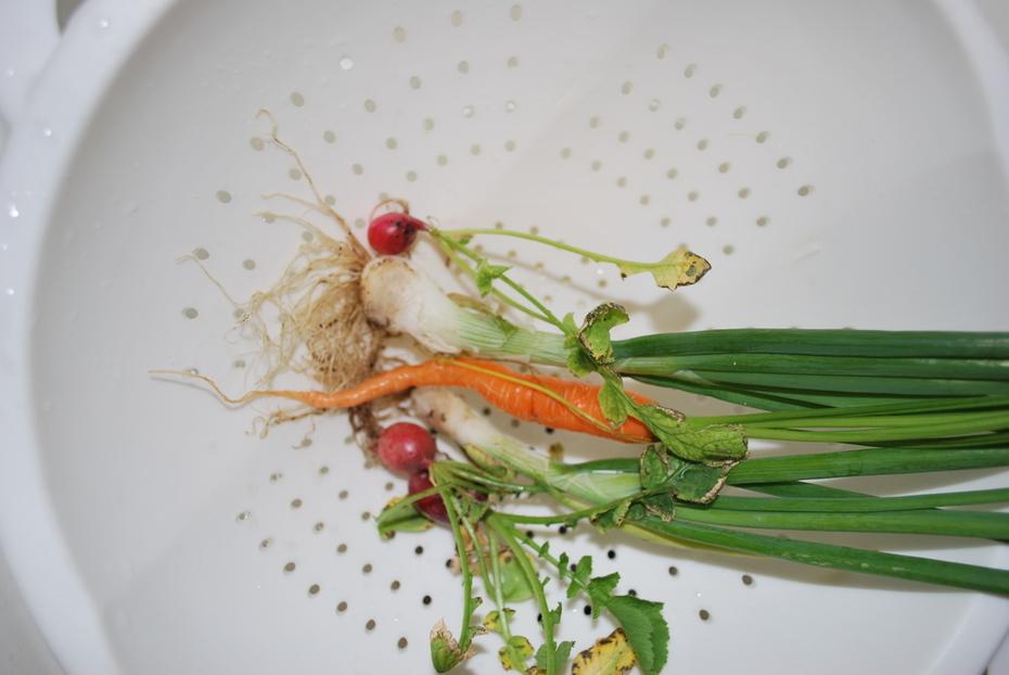 Root crops test run