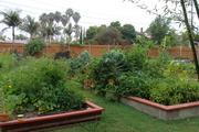 greenhouse July 2011 009
