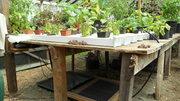 NFT Garden Bliss