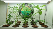 small system BLC