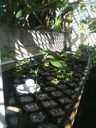 Sacrificial Plants