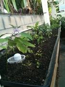 Grow bed 1 & 2