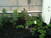 Aquaponic Herb Garden.