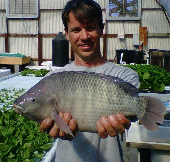 big o fish