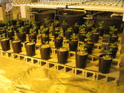 Aquaponics update 3-24-2012 005