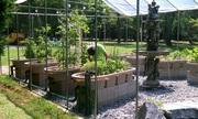Tomatoes are growing like Kudzu