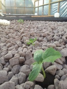 First plants sprouting
