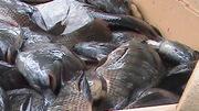 fish beans 056