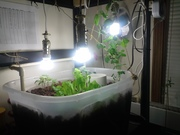 Grow bed and CFL's