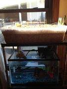 First aquarium build