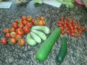 This mornings harvest