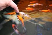fish_IMG_8830