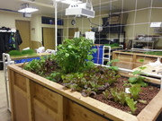Growbed 3-20-14