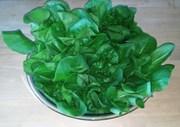 Lettuce22feb2014web