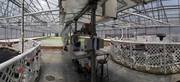 Indoor Greenhouse Panorama