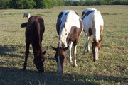 Son (Dakota), Daughter (Tallie), and Mom (Sheyanne)