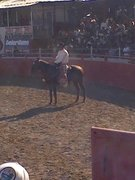 Me workin as the pick up man for Mercer Rodeo Co