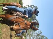 TC Ranch & Trail of Life Trailride 333