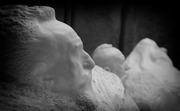 ammirando Rodin