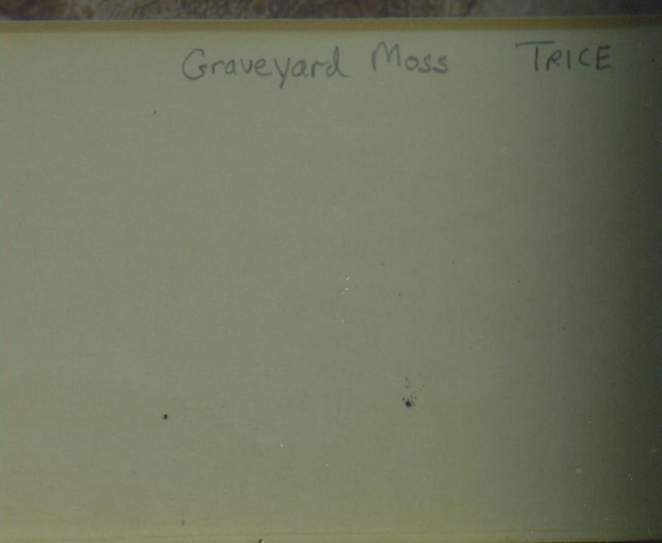 Graveyard Moss