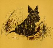 Lucy Dawson Scottish Terrier 1937 Dog Portraits, Mac and Janet
