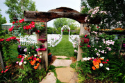 tomKphoto :: backyard loveland wedding