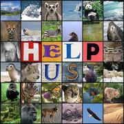 Endangered Species - Shame On Us!