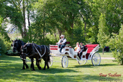 Horse Drawn Carriage and Couple