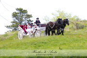 Carriage Arriving to Ceremony