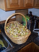 Unholy amount of tomatillos