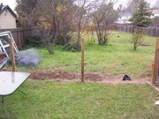 What our yard looked like when we moved in