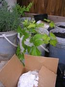 Backyard Container Garden