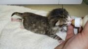 Kirin, the bottle kitten