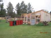 Greenhouse and rain barrels